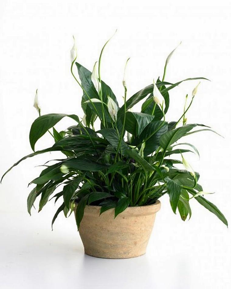 Kwiaty Ktore Produkuja Tlen I Oczyszczaja Powietrze Powinnas Miec Je W Sypialni Vivalazycie Pl